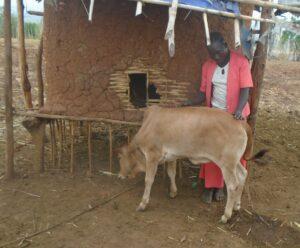 Lomiche er sammen med kalven sin